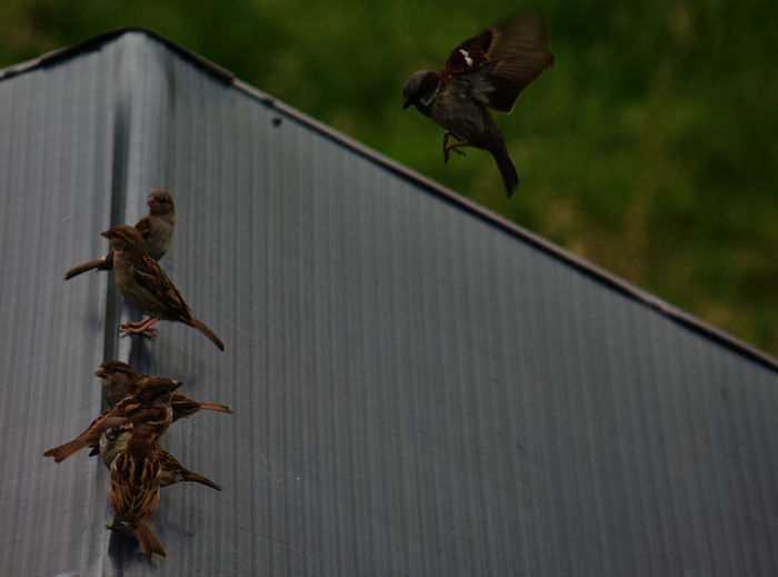 Birds flying in a row