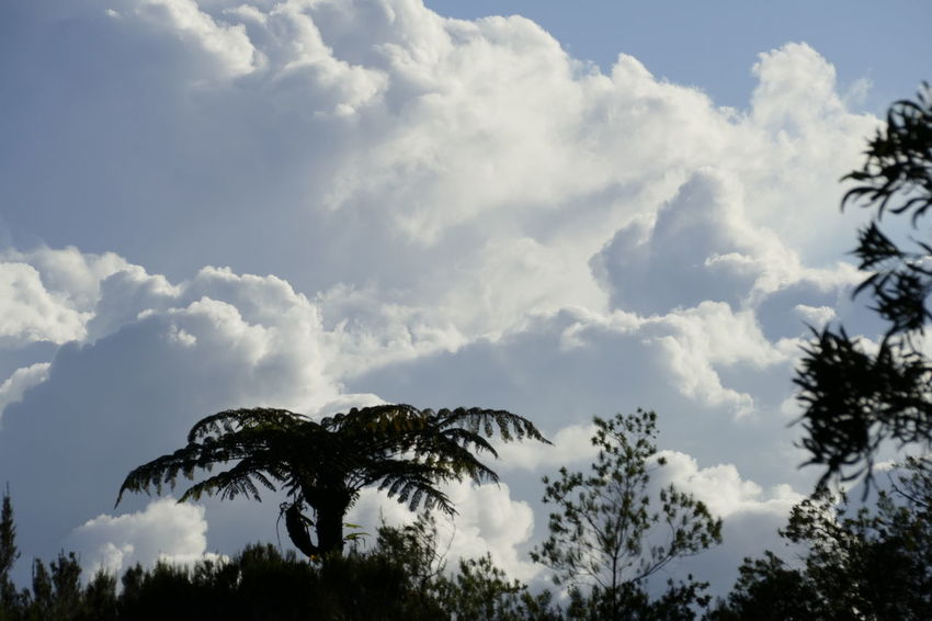 Beauty In Nature Cloud - Sky Day Growth Low Angle View Nature No People Outdoors Scenics Sky Tranquility Tree