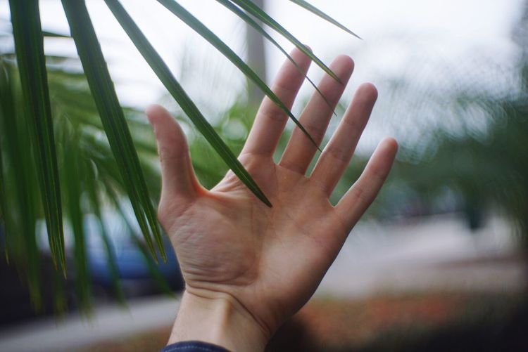 Cropped hand of woman by plants at yard