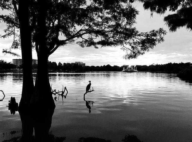 morning at the lake Lake Park Orlando Florida Nature Blackandwhite Bird Water Shadow Silhouette Sunlight Outside Wildlife Lake Eola Park