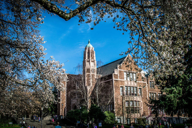 Architecture Blue Building Exterior Built Structure Cherry Blossoms Clear Sky Low Angle View Music Department Building Tree University Of Washington Seattle