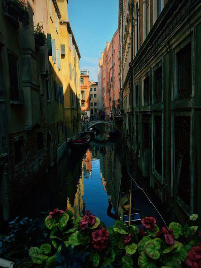 Break The Mold Venice Flower Water