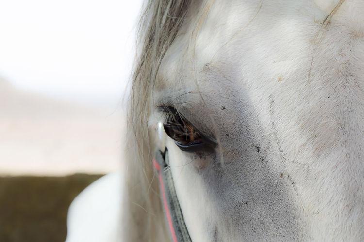 Horse Horseeye Portrait Iran Iranshots Iranpics First Eyeem Photo