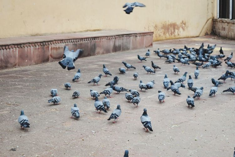 High angle view of pigeons flying