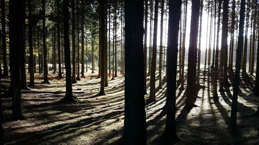 Autumn in Denmark 🍁🍁Autumn Denmark Forrest Nature Outdoors Landscape Tree