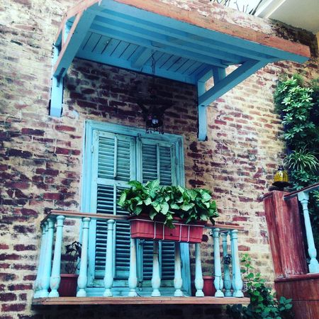 Architecture Building Exterior Built Structure City Day Flower House Low Angle View Nature No People Old Cairo Oldish Oldishly Chill Outdoors Plant Residential Building Window Window Box