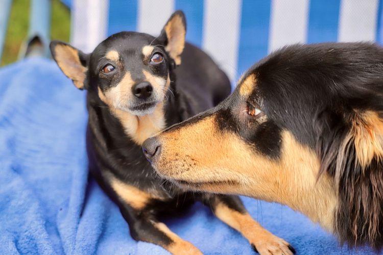 Close-up of 2 dog portraits