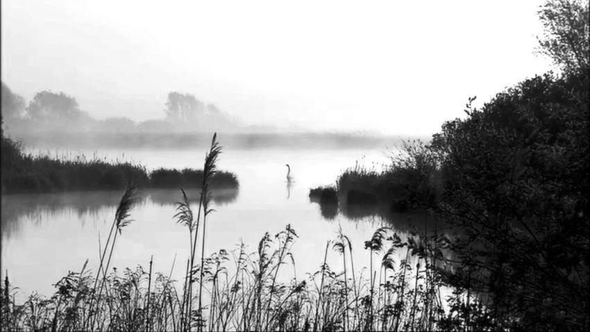 Lanscapes Lanscape Photography Photography Panorama Nature Photography Nature Lanscape Water Tree Fog Lake Reflection Sky Grass