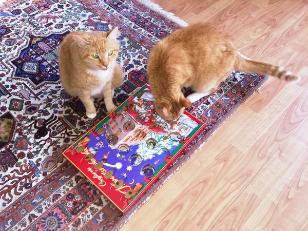 Ginger Cats Red Red Color Katzenfoto Katzenleben Katzenfoto! Katzenfotografie Cat Toy Weihnachtsdekoration Christmas Is Coming 3XSPhotography 3XSPUnity My Cats❤️ I Love Cats TIP And TAP 🤗😺 Pets Looking At Camera Portrait Togetherness