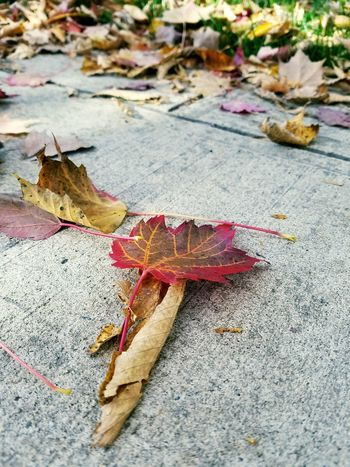 Walking to class Autumn Close-up Leaf Sidewalk Changing Seasons Changing Colors Falling Pavement Concrete