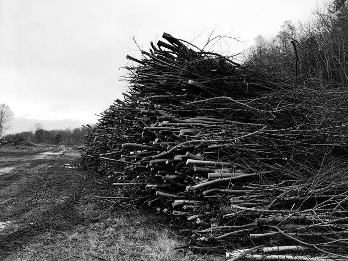 Sticks Nature