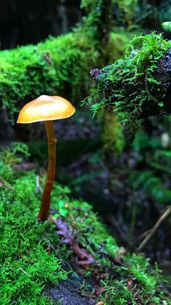 Tasmania Fungi Mushroom Fungus Growth Plant Vegetable Food Toadstool Forest Nature Moss Beauty In Nature Close-up