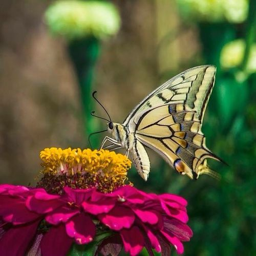 Macro Makro Butterfly Macro Photography