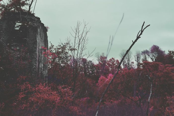 How does one understand the unknown? Experimental Decay Decay And Dereliction Derelict Decrepit Torn Pink Purple Inverted Building Building Exterior Structure Trees Edit Photography Malephotographerofthemonth Wilderness Abandoned Abandoned Places Abandoned Buildings Abandonment_issues Abandoned House Abandoned & Derelict Emotional Photography