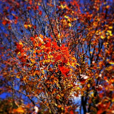Fall Colors Red Orange Yellow Vermont Beauty