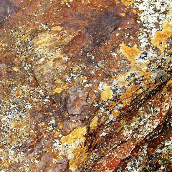 Stone Nature