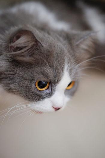 Close-Up Of Kitten