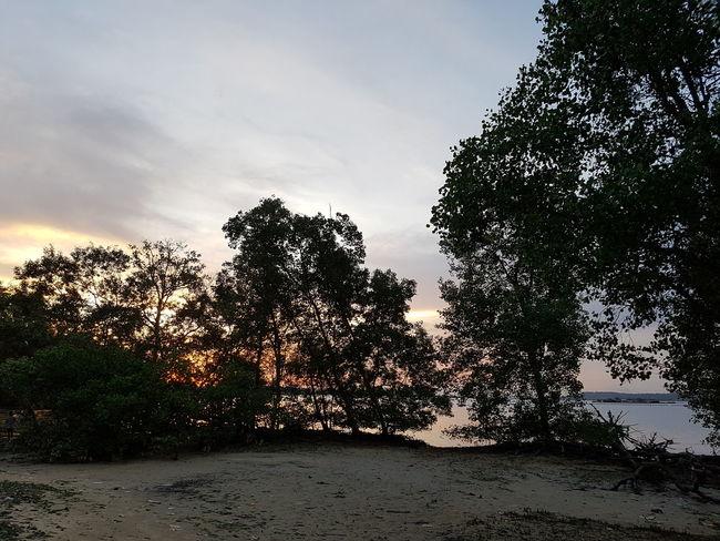 Beach landscape during dusk. Beach Dusk Sunset Environment Mangrove Tropical Nature Tree Sky Cloud - Sky Silhouette Coast Evening