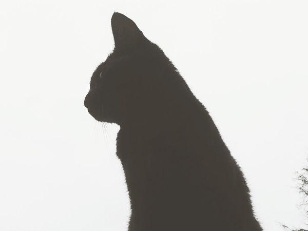 Cat Cats ♥ Miaou
