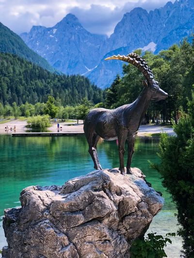 The most photographed Capricorn on The planet Emerald Great Outdoors Great Outdoors - 2018 Eyeem Awards Lake Jasna Landmark Profile View Animal Statue Statues/sculptures Statues And Monuments Statue Mountain Capricorn Capricorn Mountain Water Beauty In Nature Animal One Animal Tree Animal Themes Rock Mammal Nature Scenics - Nature Mountain Range Lake Rock - Object No People The Traveler - 2018 EyeEm Awards EyeEmNewHere The Traveler - 2018 EyeEm Awards