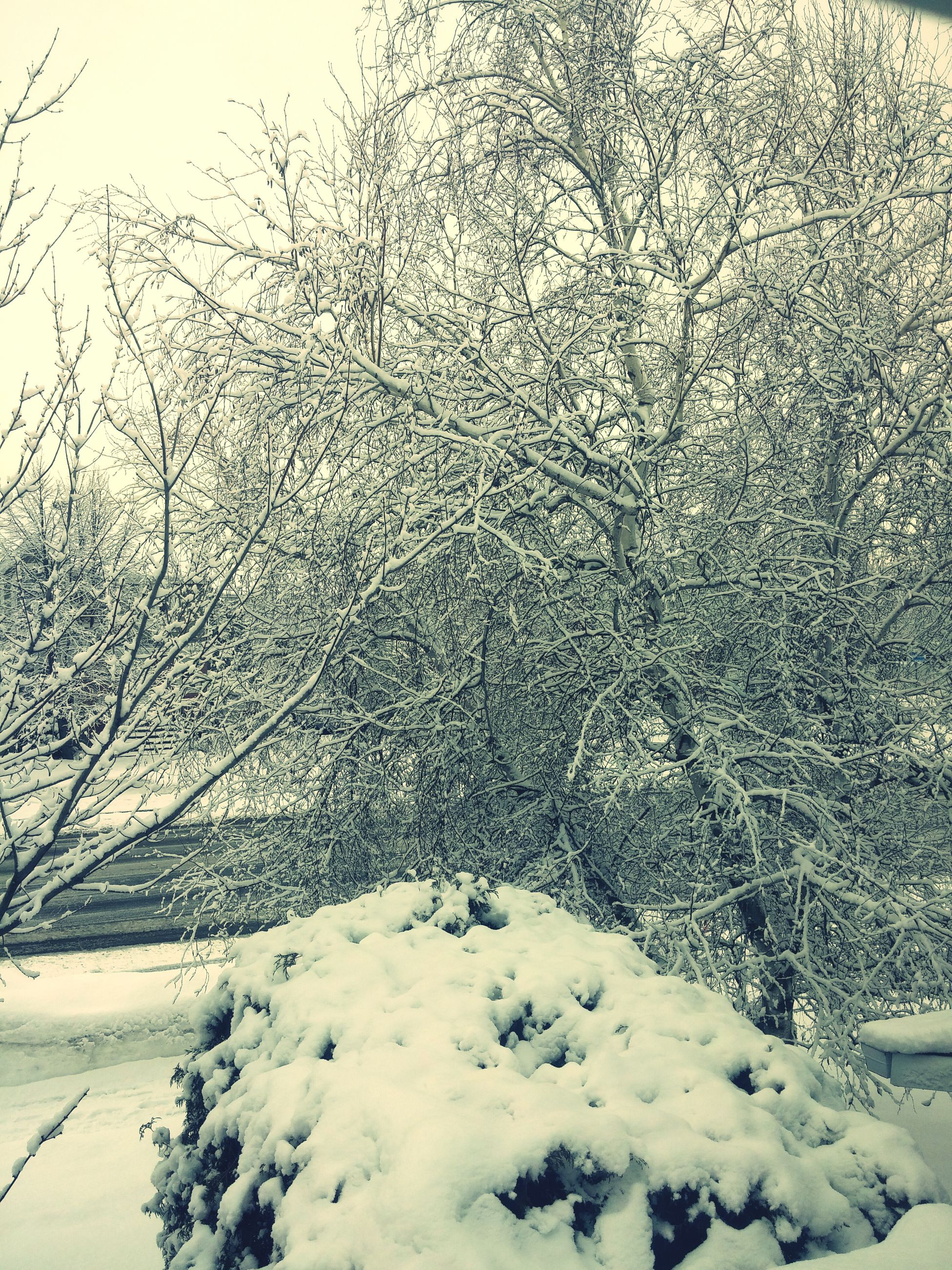 snow, winter, cold temperature, no people, nature, tree, outdoors, day, beauty in nature
