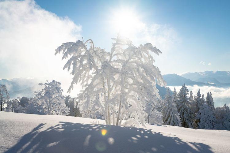 Tree covered in deep snow in scenic winter wonderland, salzburg, austria.