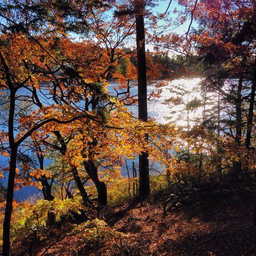 NatureVittsjönu Enjoying The View Walking Around autumn walking in Vittsjö