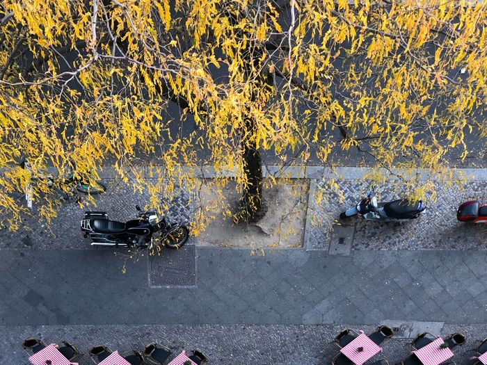street Motorbikes Motor Scooter Coffee Tables Street Cafe Cafe Table Cafe Bike Bikes Autumn Collection Autumn🍁🍁🍁 Autumn Leaves Autumn colors Autumn Trees Tree No People Road Outdoors Architecture Full Frame Day Transportation Street City Built Structure Building Exterior Nature