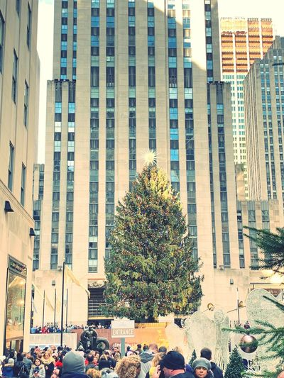 Tree Building Exterior Built Structure Architecture City Building Plant Day First Eyeem Photo