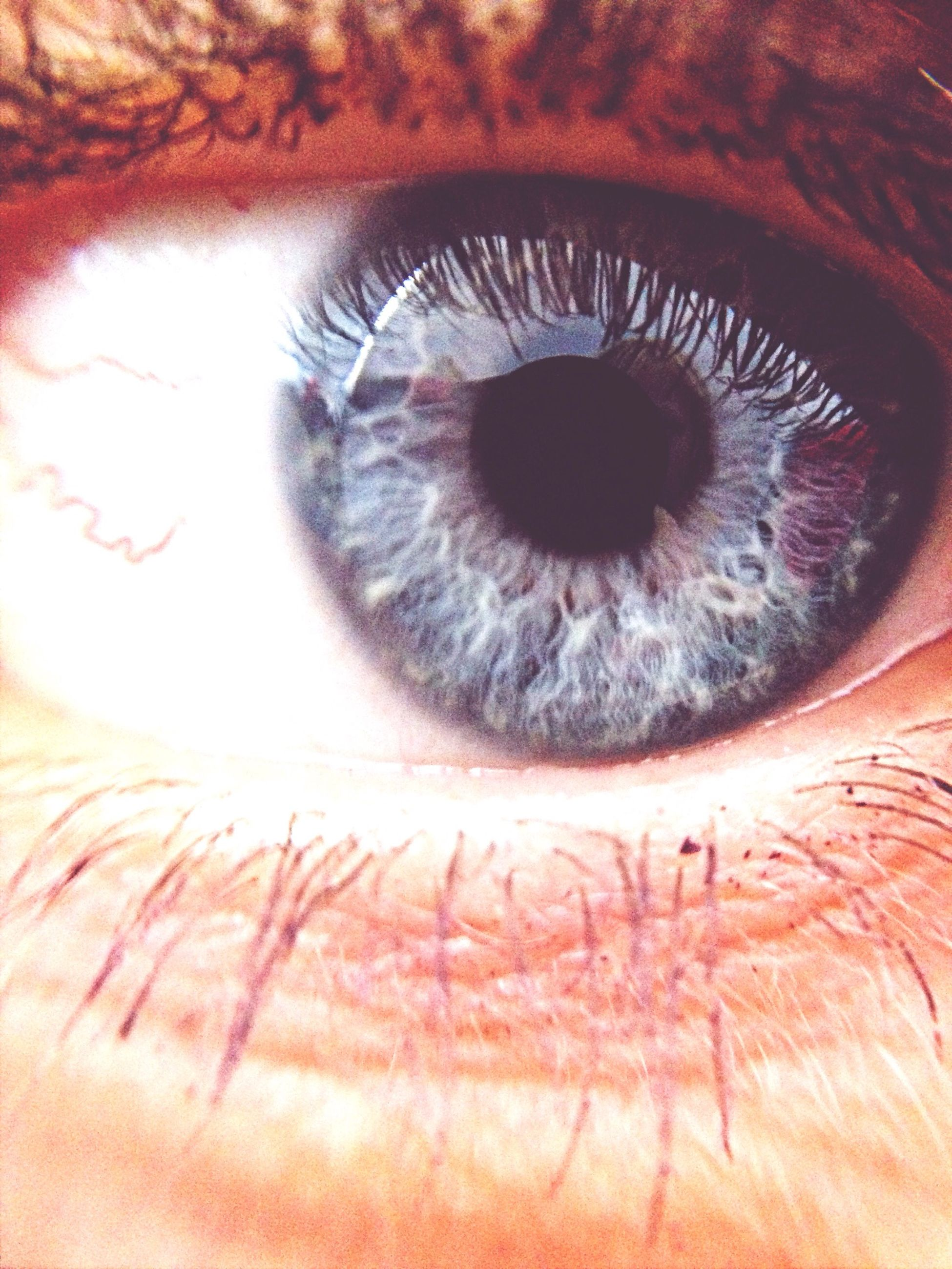 human eye, eyelash, eyesight, close-up, part of, sensory perception, human skin, eyeball, iris - eye, extreme close-up, unrecognizable person, extreme close up, indoors, looking at camera, human face, portrait, lifestyles