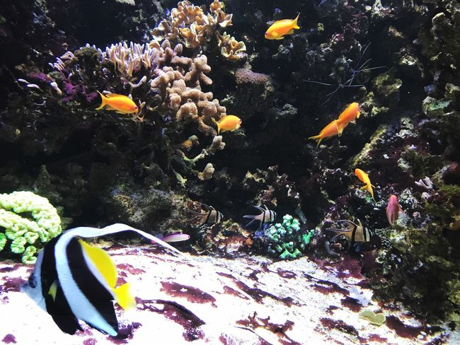 Sea Life Underwater UnderSea Fish Animals In The Wild Animal Themes Water Nature Coral Sea Swimming No People Beauty In Nature Large Group Of Animals Clown Fish Multi Colored Day Outdoors Close-up