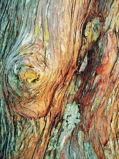Dead Tree Bark Detail, Flagler Beach. 2014. Flagler Beach, Florida Detail Nature Flatlight