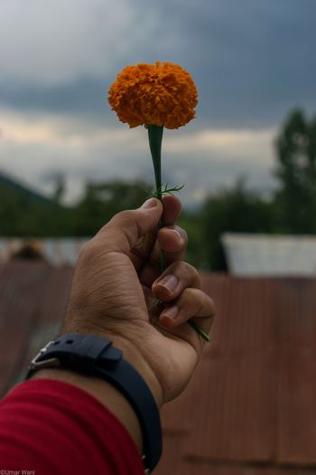 Close-up of hand holding marigold against cloudy sky