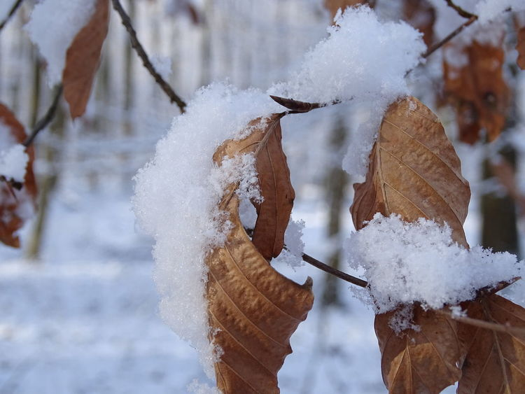 Cold Temperature Winter Snow Nature Outdoors Frozen Day Beauty In Nature Close-up No People Leaf Water Ice Frozen Beauty In Nature WeekOnEyeEm EyeEmBestPics Frosted Glass Nature Tree Winter Weather Taking Photos Snowing White Color