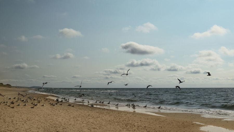 Birds on a