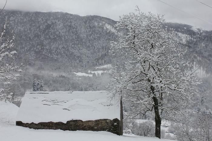 Arbre Foret Maison Manteau Montagne Neige Paysage