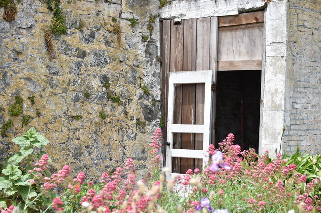 Alcatraz Alcatraz Island Architecture Beauty In Nature Blooming Blossom Built Structure Flower Fragility Growing Growth Nature Outdoors Petal Pink Color Plant Residential Structure San Francisco San Francisco Bay