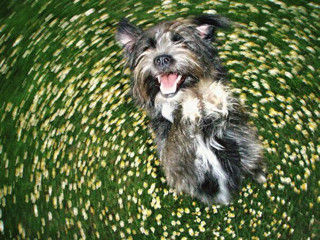 Throw A Curve Spring Into Spring Small Dogs  Flowers Pets Corner Summer Dogs Colour Of Life