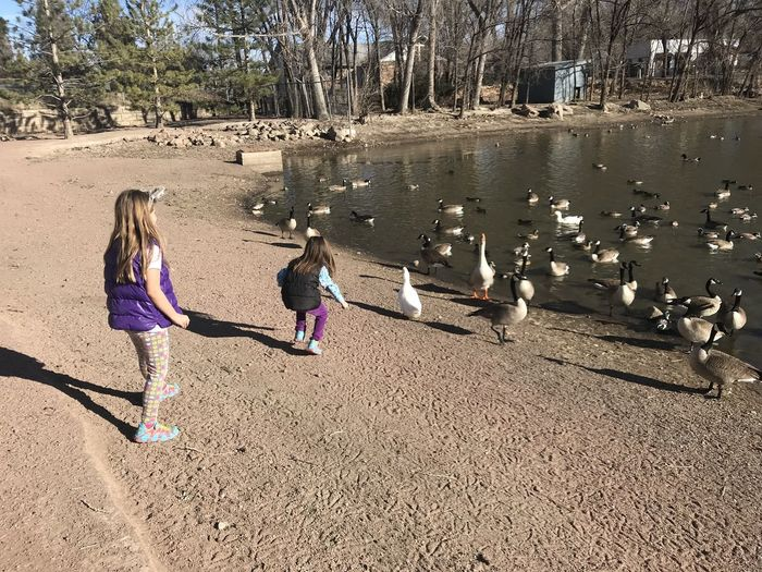 Sisters feeding ducks at Centennial Park in Cañon City, CO Geese Animal Themes Bonding Child Childhood Day Ducks Feeding Ducks Full Length Girls Leisure Activity Nature Outdoors People Real People Sand Togetherness Two People