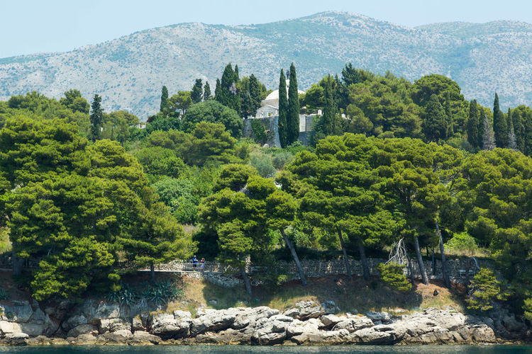 Trees against mountains at cavtat
