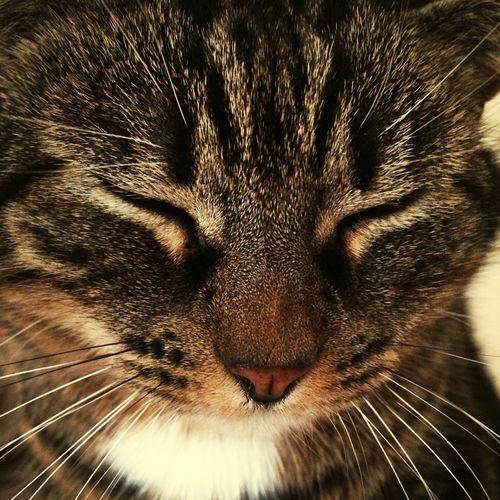 Animal Cat Portait Love