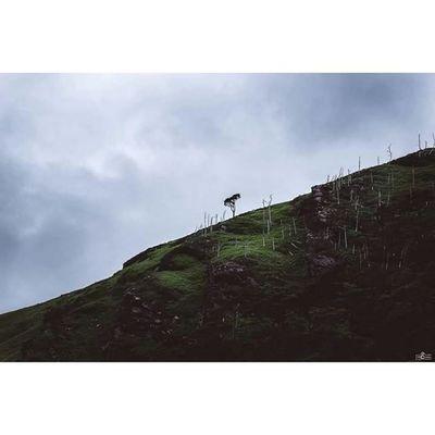 The wonderful landscapes from ireland. Irland Ireland Tree Mountains Landscapephotographer Landscape Landscapephotography Michaellangerfotografie Dublin Fotografie Photography Photographyislife Jaworskyj Calvinize Rcnocrop CripixtMovement Earthshoot Wonderful_places