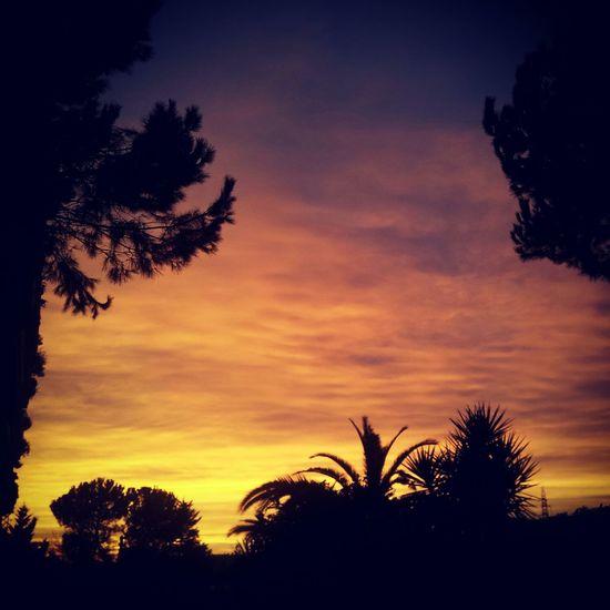 Sun Sunset Tree Sky