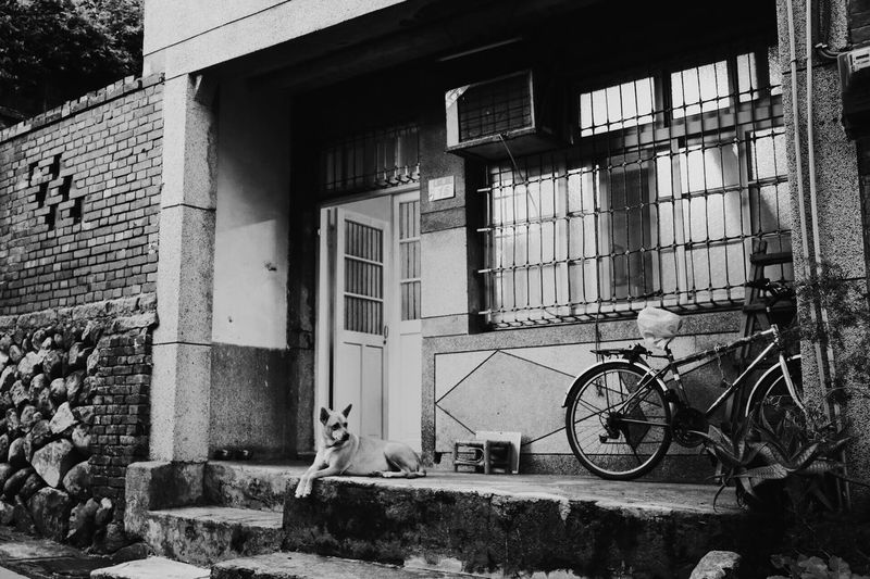 Canon Canonphotography Canon Camera VSCO Vscocam Vscofilm Dog House Blackandwhite Blackandwhite Photography Tamsui Hanging Out Taking Photos Bike Enjoying Life Black & White Monochrome Photography