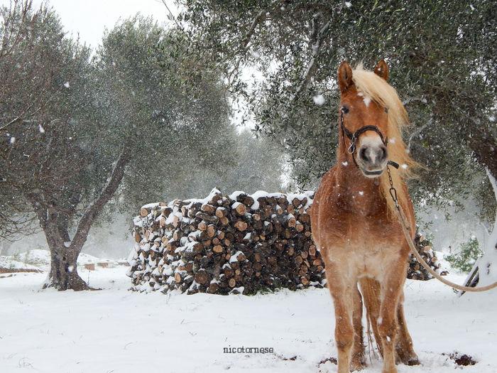 Italy Salento Salento Puglia Scenics Beauty In Nature Travel Destinations Outdoors Puglia Italia Nature Day Snow