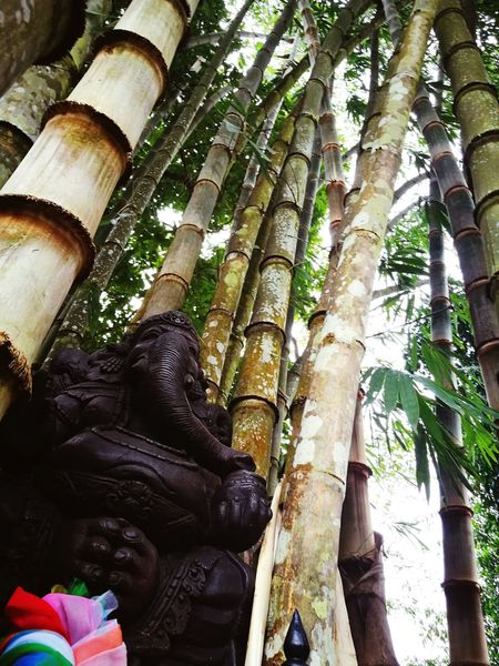 bambou life Thailandtravel Elephant Bamboo God's Beauty Tree Day No People Nature