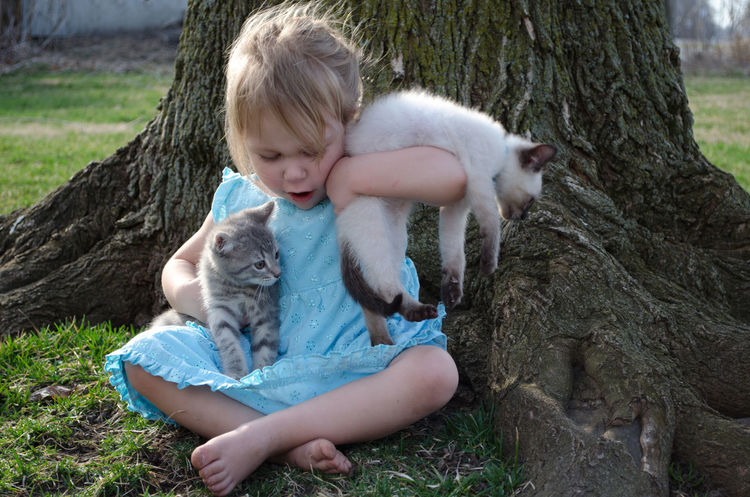 a cute little girl in a blue dress struggles to hold on to new kittens Kittens Love Pets Corner Active Animal Themes Barefoot Caucasian Child Childhood Day Domestic Animals Furry Girl Holding Animals Kid Mammal One Animal One Person Outdoors People Pets Real People Siamese Cat