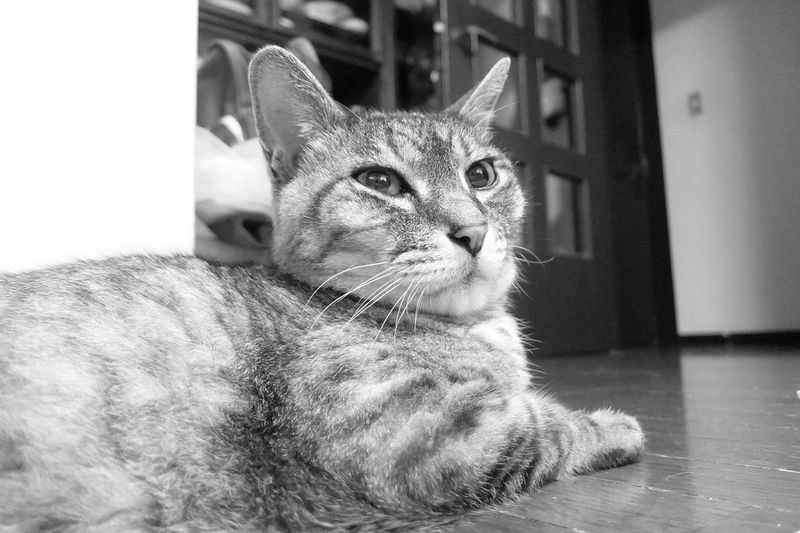 さぁ寝る準備はオッケーにゃ(ФωФ)フフフ... Dandy ダンディ KAWAII Playing With The Animals ねこ Cute Mycat Cat Monochrome