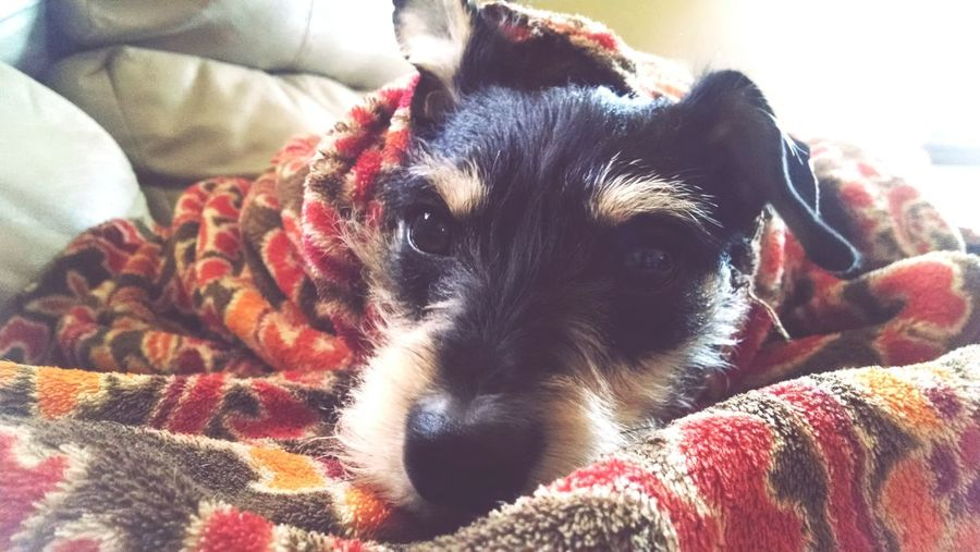 Mydogiscuterthanyourdog KTBugPhoto DoggyBurrito