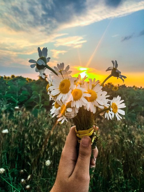 Have a nice day 🤗 Flower Nature Human Hand Growth Flower Head Plant Sky Personal Perspective Field Sunset Outdoors View Landscape Taking Photos Naturelovers Close-up EyeEmNewHere Istanbul Istanbul Turkey Ankara